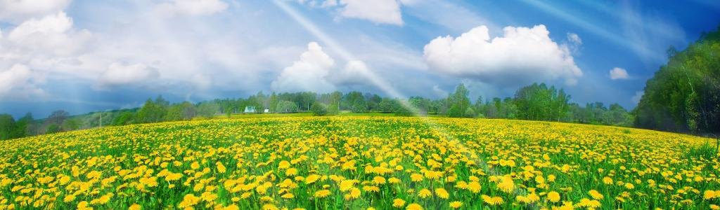 Технологии и иновационни решения за земеделието, екологията и опазването на почвените ресурси