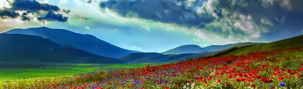 Фундаментални изследвания в областта на почвознанието, агроекологията, земеделието и опазването на околната среда